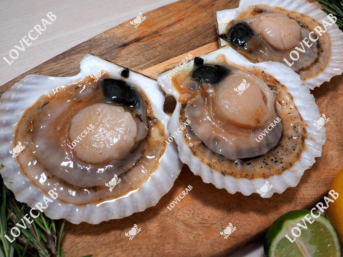 Морской гребешок на полустворке