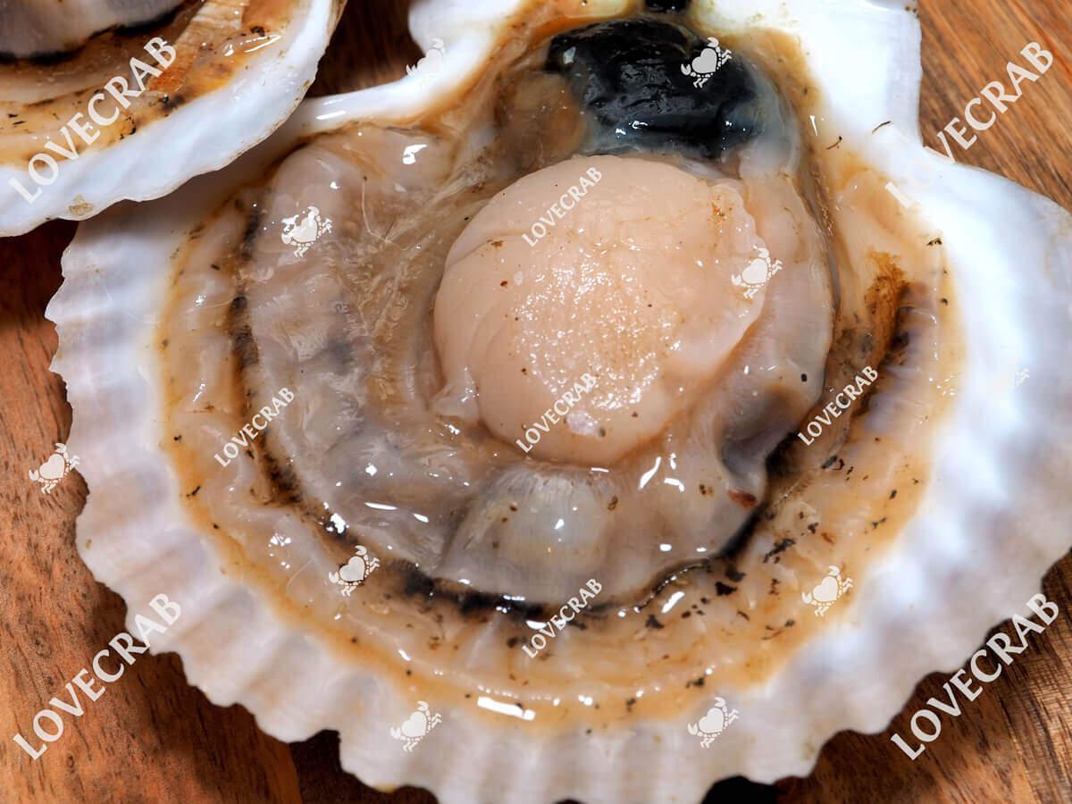 морской гребешок на раковине